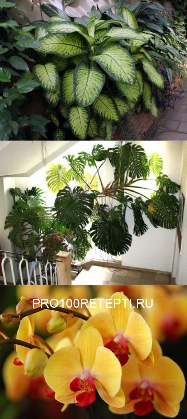 Под одной крышей с вампирами! Какие растения вытягивают из тебя все соки.